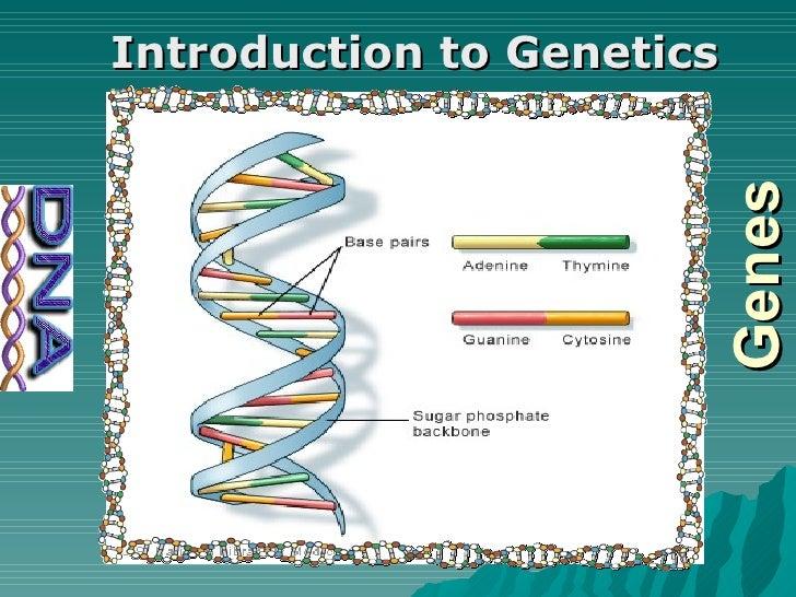 Genes Introduction to Genetics