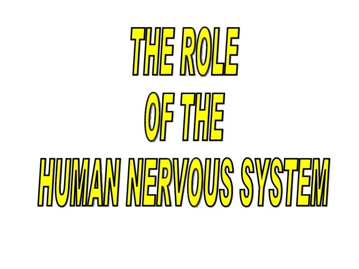 THE ROLE  OF THE HUMAN NERVOUS SYSTEM