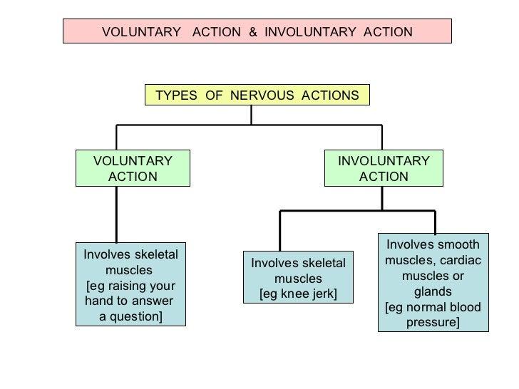 Autonomic Nervous System Essay Sample