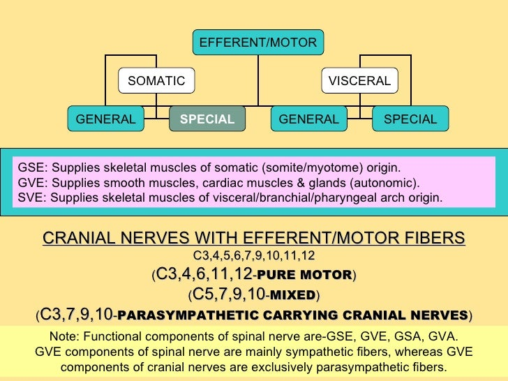 Functional components ...