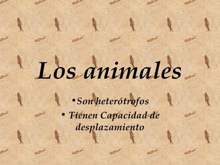 Los animales <ul><li>Son heterótrofos </li></ul><ul><li>Tienen Capacidad de desplazamiento </li></ul>