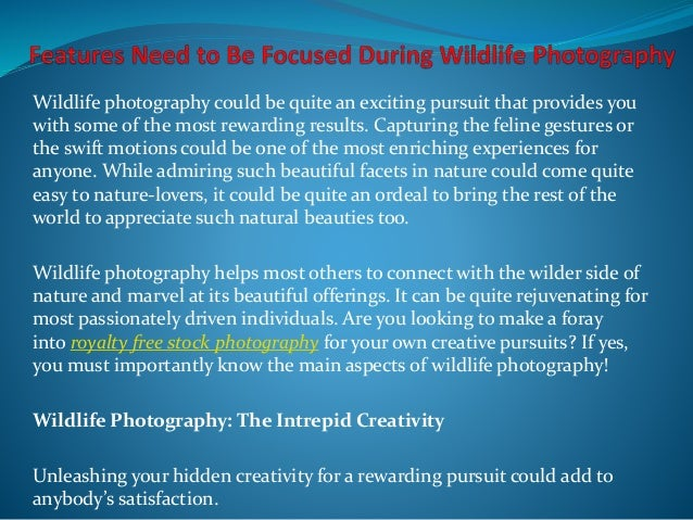Features need to be focused during wildlife photography