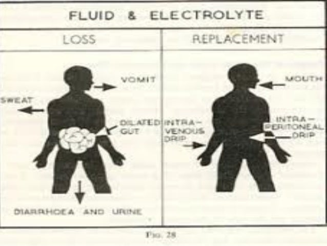 functions of electrolytes in the body pdf