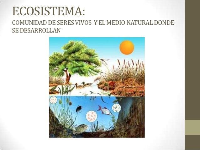 ECOSISTEMA:COMUNIDAD DE SERES VIVOS Y EL MEDIO NATURAL DONDESE DESARROLLAN