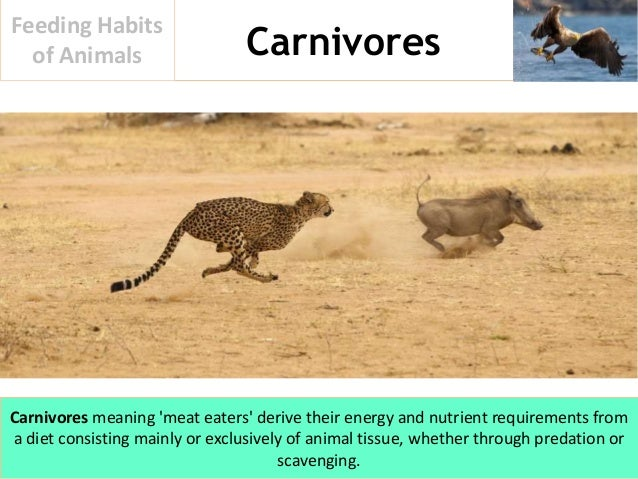 Feeding Habits Of Animals