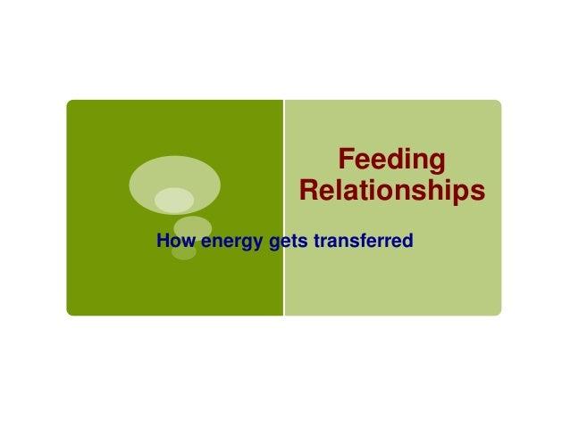 Feeding Relationships How energy gets transferred