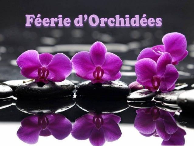 Feerie d-orchidees-helen