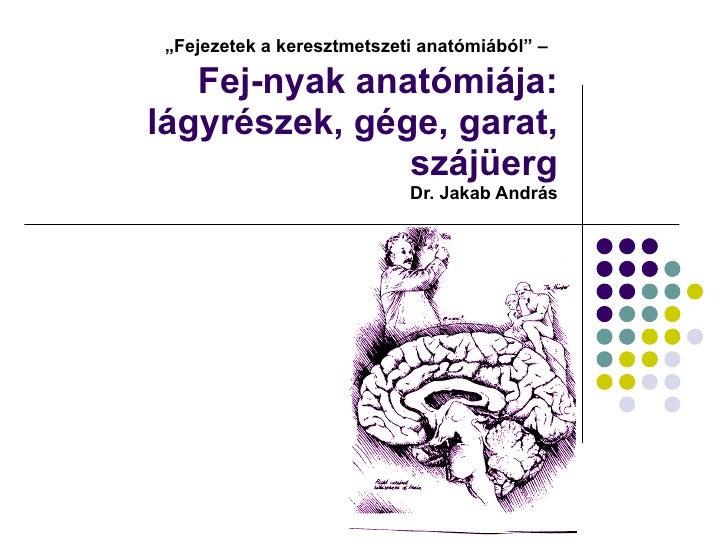 """"""" Fejezetek a keresztmetszeti anatómiából"""" –   Fej-nyak anatómiája: lágyrészek, gége, garat, szájüerg  Dr. Jakab András"""
