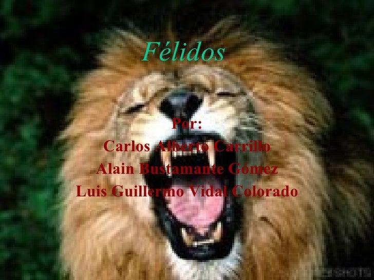 Félidos Por: Carlos Alberto Carrillo Alain Bustamante Gómez Luis Guillermo Vidal Colorado