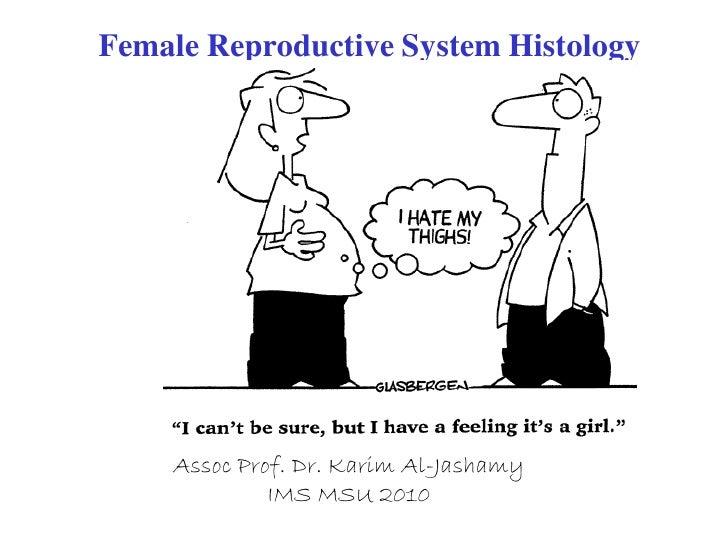 Female Reproductive System Histology         Assoc Prof. Dr. Karim Al-Jashamy              IMS MSU 2010