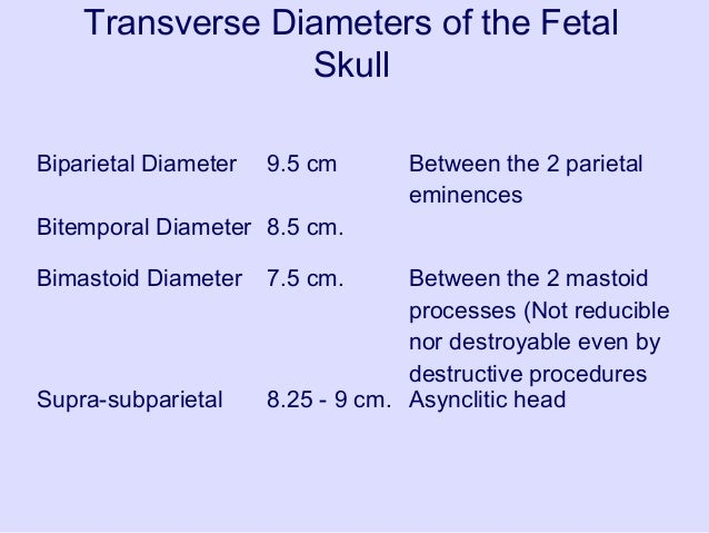 Fetal Skull Ppt of Fetal Skull Well Flexed