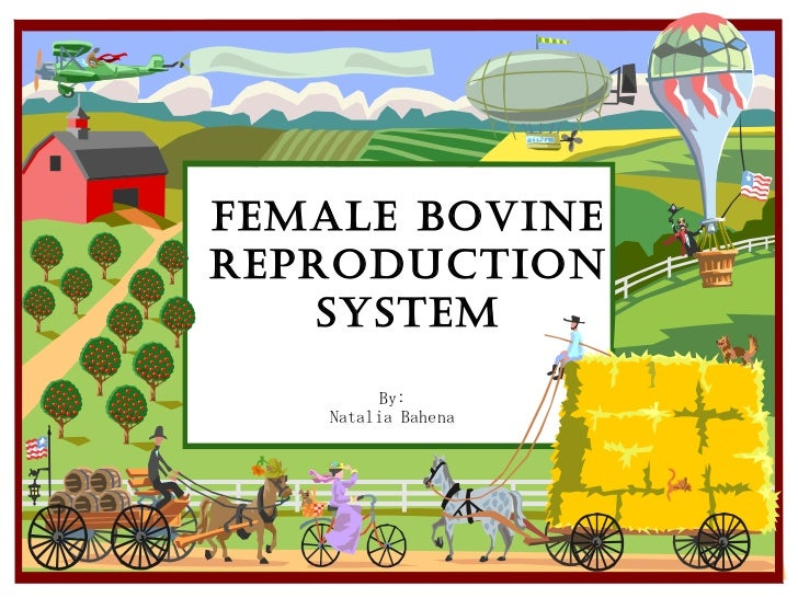 Female Bovine Reproduction System By: Natalia Bahena