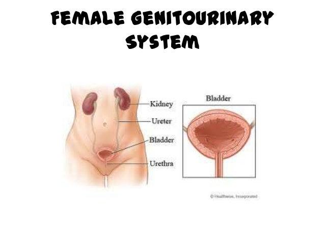 Female genitourinary