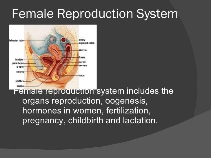 Female Reproduction System <ul><li>Female reproduction system includes the organs reproduction, oogenesis, hormones in wom...