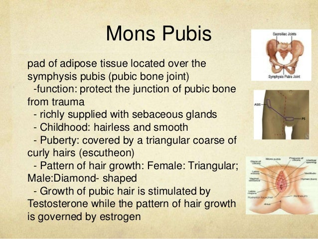 Mons pubis anatomy images