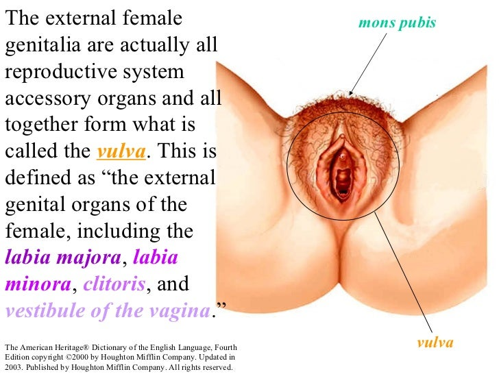 latina vomit porn