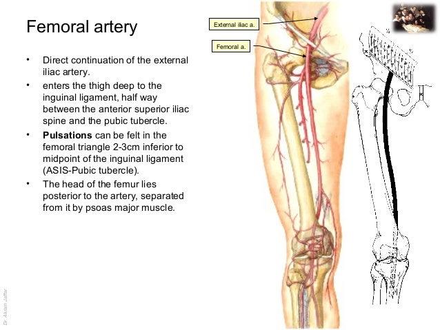 similiar was the femoral artery palpated keywords, Cephalic Vein
