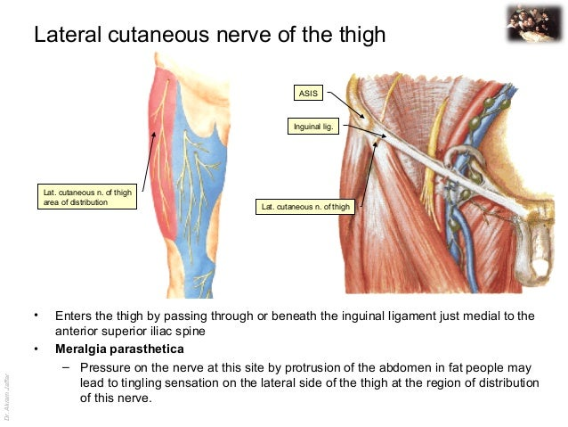 lateral femoral cutaneous nerve mri, Muscles
