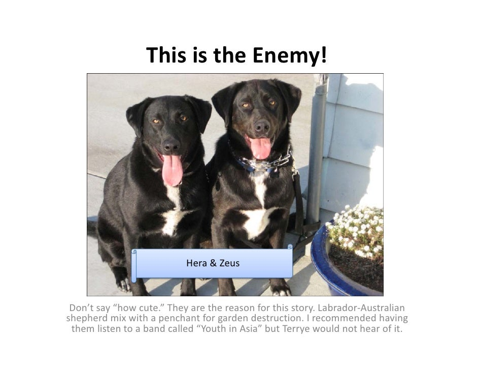 "This is the Enemy!                                Hera & Zeus     Don't say ""how cute."" They are the reason for this story..."