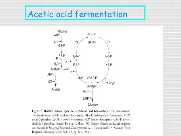 carbohydrate fermentation johnny Bacteria perform fermentation, converting carbohydrates into lactic acid the study of fermentation is called zymology history of fermentation the term ferment comes from the latin word fervere, which means to boil.