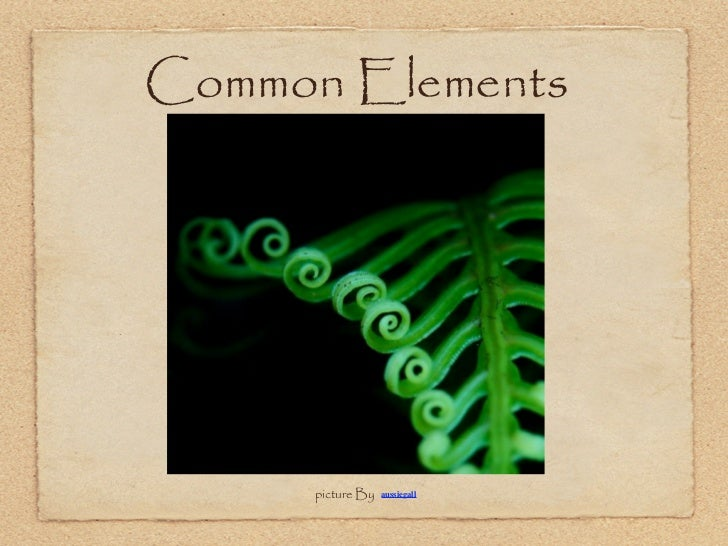 Common Elements     By Fern      picture By   aussiegall