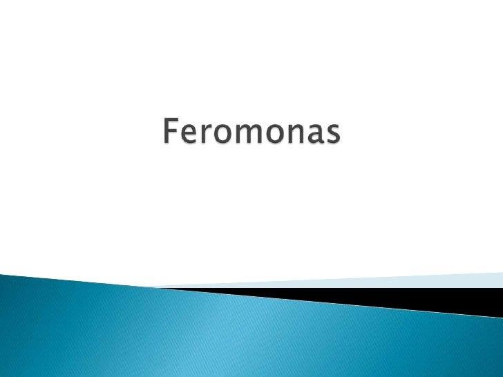 Presentacion Feromonas