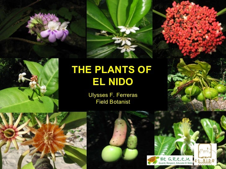 THE PLANTS OF  EL NIDO Ulysses F. Ferreras Field Botanist