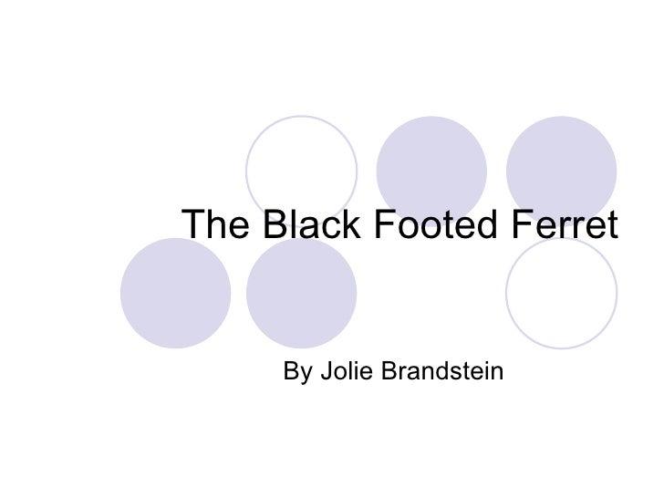 The Black Footed Ferret By Jolie Brandstein