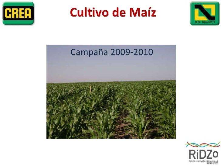 Cultivo de Maíz<br />Campaña 2009-2010<br />