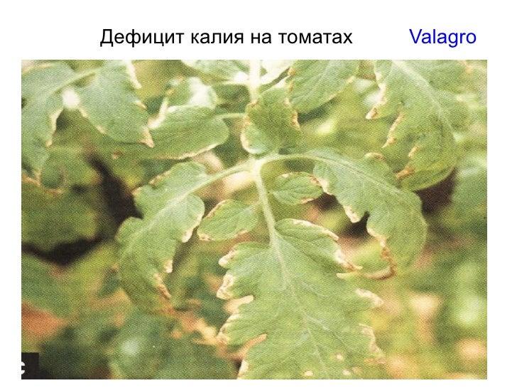 Дефицит калия на томатах  Valagro