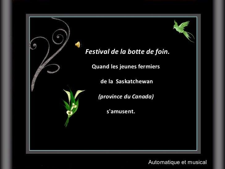 Festival de la botte de foin.  Quand les jeunes fermiers  de la Saskatchewan (province du Canada)   s'amusent. ...