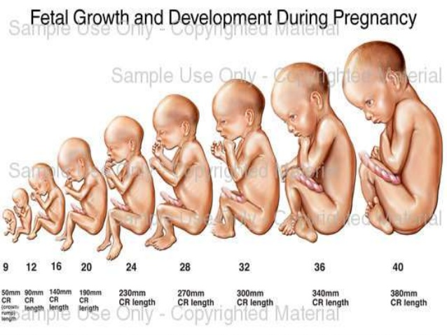 lmp gestational age To...