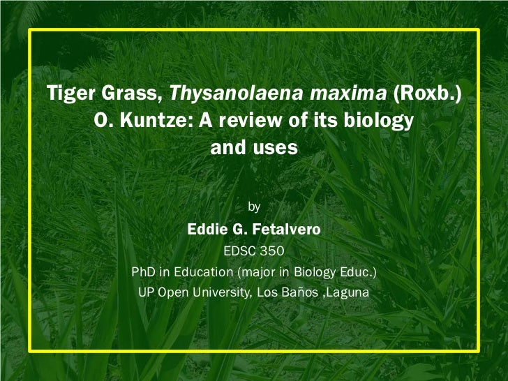 Tiger Grass, Thysanolaena maxima (Roxb.)     O. Kuntze: A review of its biology                 and uses                  ...