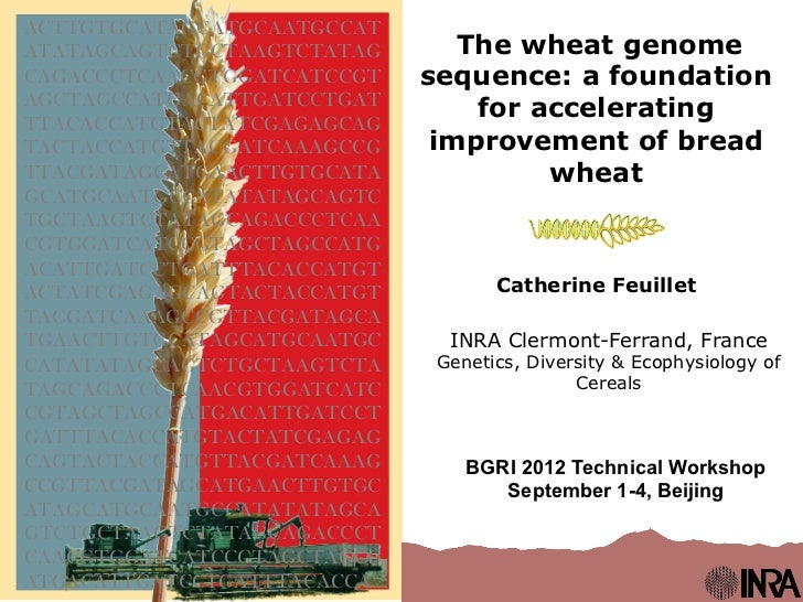 The wheat genome sequence: a foundation for accelerating improvment of bread wheat