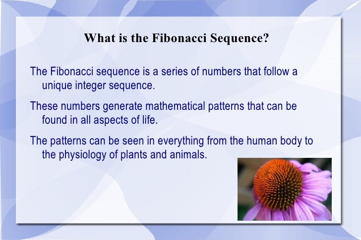 Fibonacci Sequence Facts For Kids