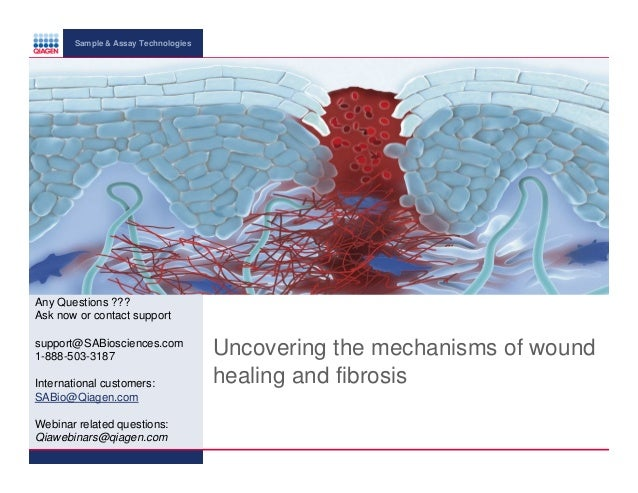 Fibrosis and wound healing 2013
