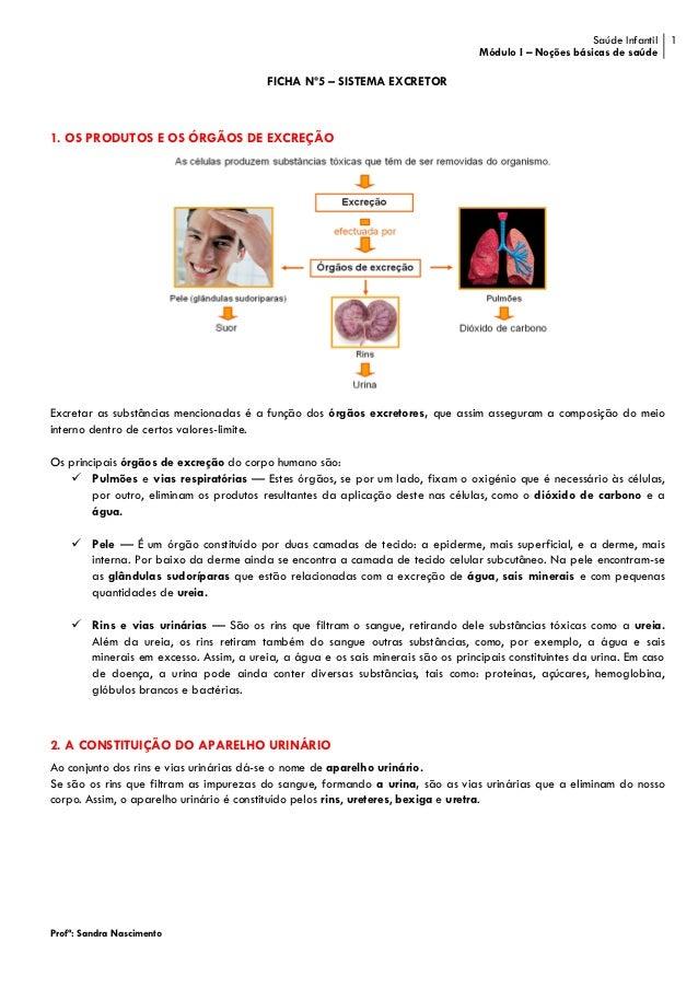 Ficha nº5 - sistema excretor
