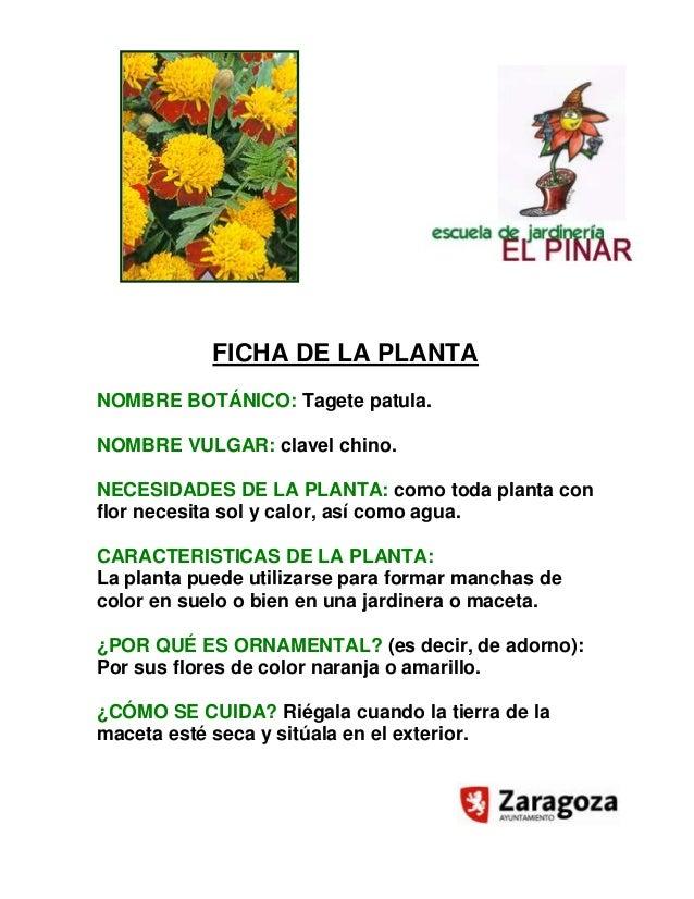 Ficha planta tajete 2012 - Fichas de plantas para ninos ...