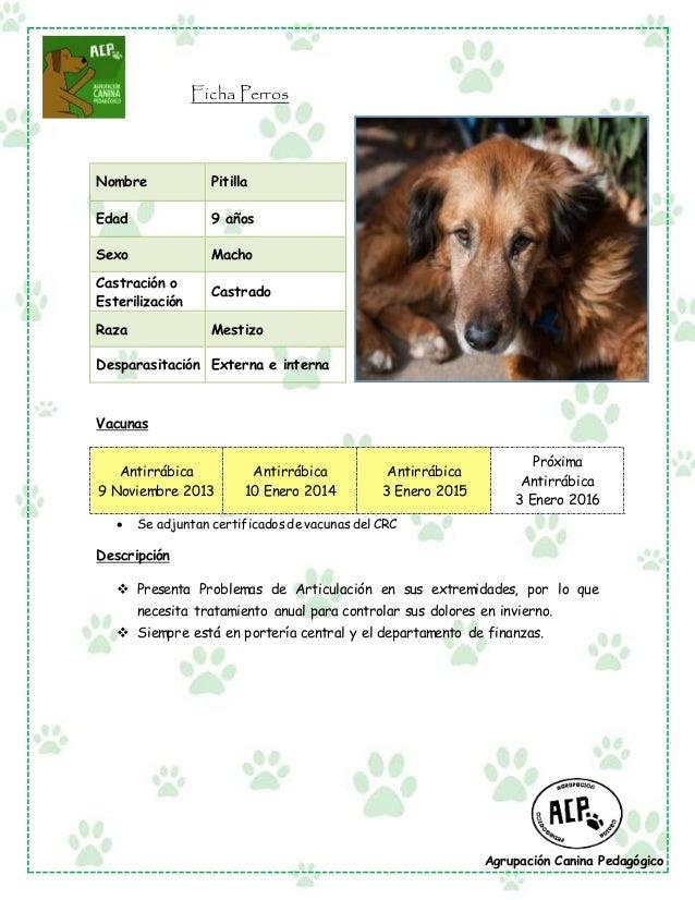 Agrupación Canina Pedagógico Ficha Perros Vacunas Antirrábica 9 Noviembre 2013 Antirrábica 10 Enero 2014 Antirrábica 3 Ene...
