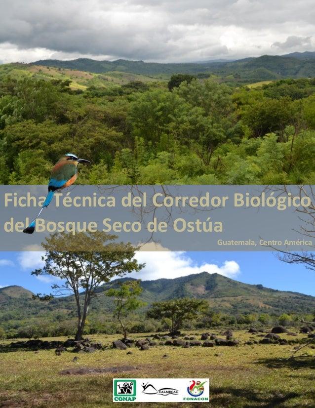 Ficha técnica del corredor biológico del bosque seco de ostúa