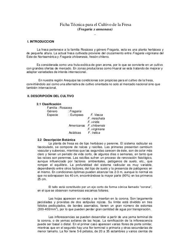 Ficha Técnica para el Cultivo de la Fresa (Fragaria x annanasa) _ I. INTRODUCCION La fresa pertenece a la familia Rosácea ...