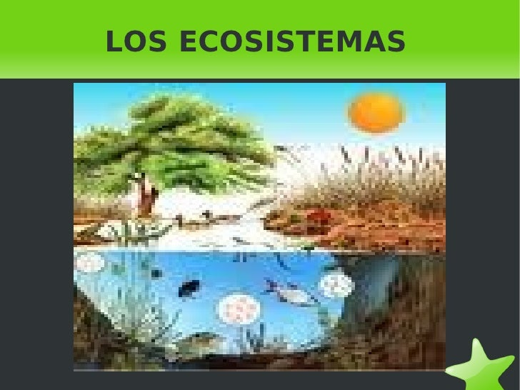Ecosistemas biologia trabajo de 4ºeso b