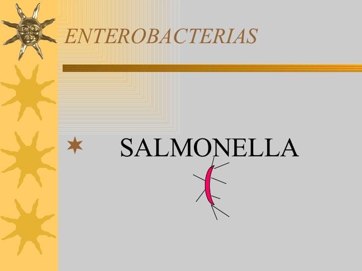 ENTEROBACTERIAS <ul><li>SALMONELLA </li></ul>