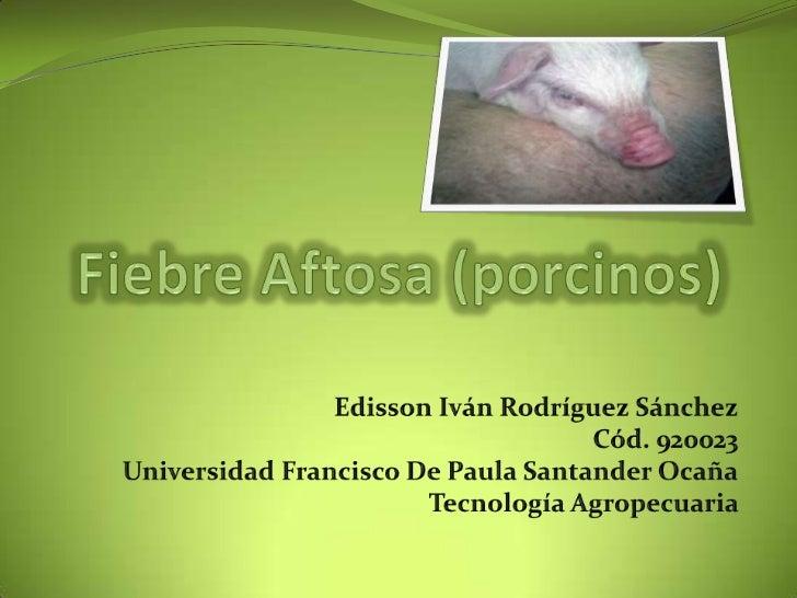 Fiebre Aftosa (porcinos)<br /> Edisson Iván Rodríguez Sánchez<br />Cód. 920023<br />Universidad Francisco De Paula Santand...