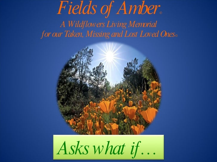 Fields of Amber © A Wildflowers Living Memorial for our Taken, Missing and Lost Loved Ones © Asks what if…