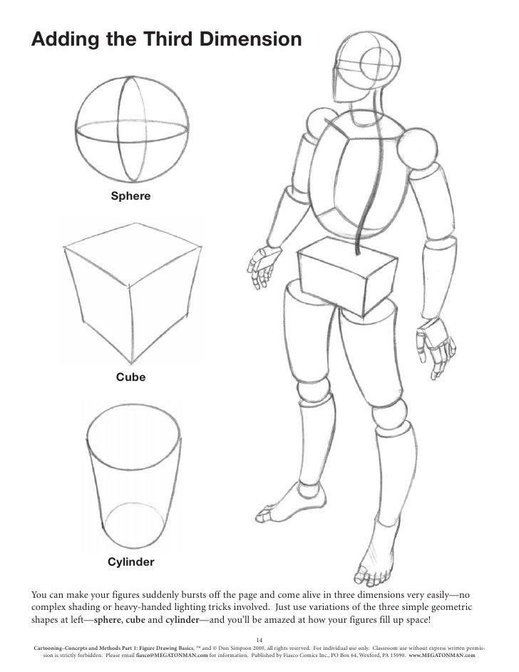human body sketches basics