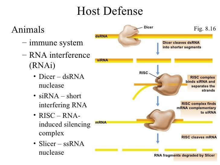 Host Defense <ul><li>Animals  </li></ul><ul><ul><li>immune system </li></ul></ul><ul><ul><li>RNA interference (RNAi) </li>...