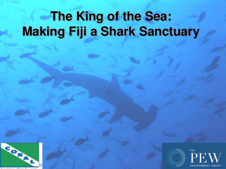 The King of the Sea:Making Fiji a Shark Sanctuary                                1