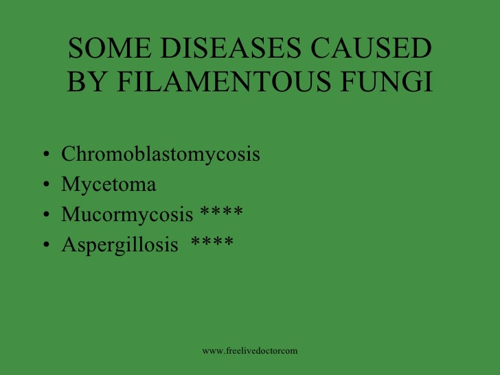 SOME DISEASES CAUSED BY FILAMENTOUS FUNGI <ul><li>Chromoblastomycosis </li></ul><ul><li>Mycetoma </li></ul><ul><li>Mucormy...