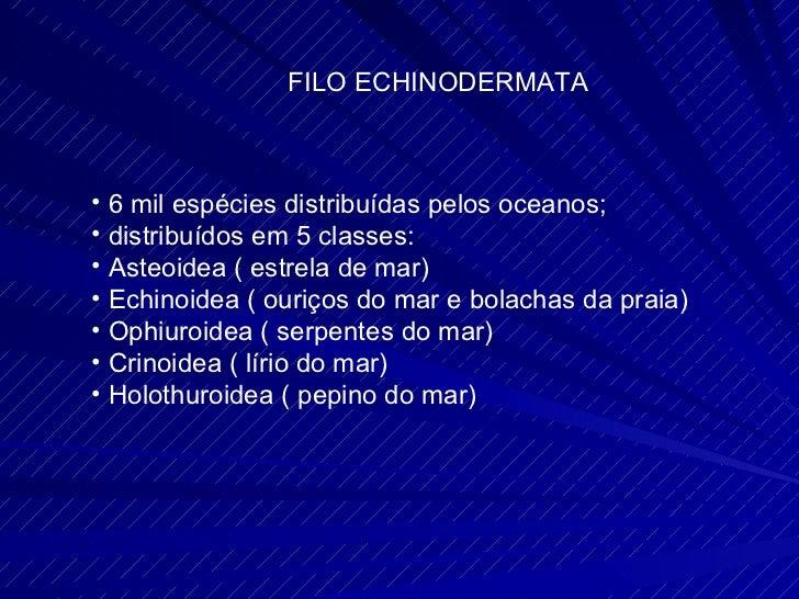 FILO ECHINODERMATA <ul><li>6 mil espécies distribuídas pelos oceanos; </li></ul><ul><li>distribuídos em 5 classes: </li></...